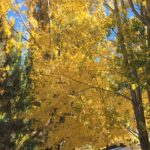 Autumn in Big Bear and Whats Up