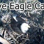 Live Eagle Cam